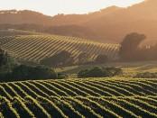 explore-wine-country-hero